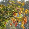 秋祭り:祈る