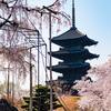 京都の桜を撮ってきた