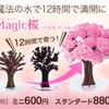 自分で育てるMagic桜 通販はコチラ