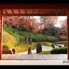 【紅葉】京都・光明院 ~「そうだ 京都、行こう」に憧れて~