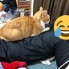 【猫ブログ】う、動けない・・・