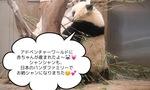安住紳一郎アナの「パンダ命名予想的中率」がすごい・・・