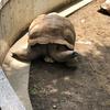 5年ぶりに千葉市動物公園に行ってきました。
