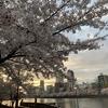 4月5日・日曜日 【明日は何の日:曽根崎心中序幕】