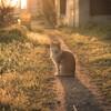 ポートレートレンズで夕暮れのネコさんを撮影する