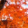 神奈川の紅葉スポット!宮ヶ瀬湖で紅葉撮ってきました