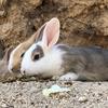 【広島 旅】大人気スポット★700羽のウサギ天国大久野島の楽しみ方【うさぎ島】