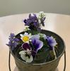 小部屋の花