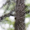 夏休みの自由研究 クモが網を張るところを観察