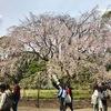 六義園(桜の名所・お花見おすすめスポット)
