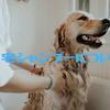 犬の自宅シャンプー【セルフ】