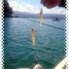 キス釣り(20.5cmまで)。波高でキスのメッカ鷲崎へ行けず。