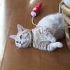 圧巻! 猫ドリフト