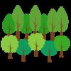 【ツベルクリンWalker】インスタ映えする神秘の森・篠栗九大の森(福岡県篠栗町)
