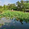 白山神社の蓮池(新潟県新潟)