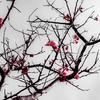 〜春の風景〜