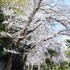 -数学- 円分多項式の係数に関する鈴木治郎氏の論文を読む