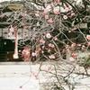 神戸・三宮神社と四国銀行(コダック シグネット35 )