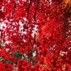 北鎌倉を散策する 〜夏と秋のコントラスト〜