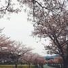 桜の町 篠山