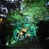 下鴨神社 糺の森の光の森へ♪
