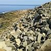 「捨てた石が要石に」マルコの福音書12章1〜12節