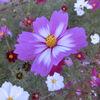 2020/11/07 北総 花の丘公園