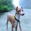 犬と温泉旅行 <翌日編>箱根⇨御殿場⇨沼津