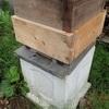 今日のミツバチ君 嫌なものを発見 Today's bees Discovering what  is unpleasant