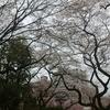 7月になったので、忘れていた桜の写真を公開しよう!~Welcome to the IREBAJIJI~
