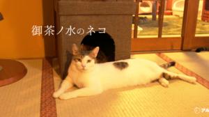 ネコ英語「御茶ノ水のネコ」保護ネコカフェってどんなとこ?