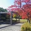 辰巳公園と浅川改修