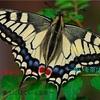 ポルノグラフィティのアゲハ蝶が1番のサビでマジでアゲハ蝶の話しかしてない事に気づいた