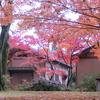 福井の養浩館庭園の紅葉が奇麗!日本屈指の庭園は本当にすばらしかった!