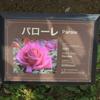 パローレ 京成バラ園 2016/05/16