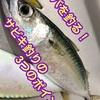 DAY3一ヶ月一万円釣り生活リハーサル編:サバを釣る!サビキ釣りの3つのポイント