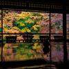 京都で見られる「幻の」紅葉とはいったい?今年も限定公開。