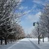 雪遊びの季節です…