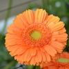 暖かい色の花の世界