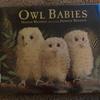 Owl Babies -フクロウのこどもたち-