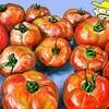 大玉トマトの収穫