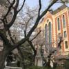 三田キャンパスのソメイヨシノ