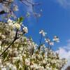 百花物語こども花教室 佐野市呑竜幼稚園教室は5月末までおやすみいたします。