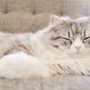 【人間関係】心地よく眠る方法 HSP 自律神経