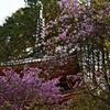 岩船寺の続き