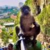 GoPro(ゴープロ)を欲しがっている猿が多発しているぞっ!#gopromonkey