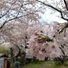 3878 トヨジガレの桜