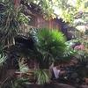 カオサンロードに近いゲストハウス「Villa Guest House」レビュー
