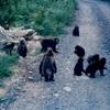 「屋久猿」・しりとりの記憶・27…