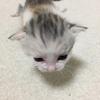 保護猫のムーアさんの子育て⑤生後1か月後の様子。超かわいい癒しの子猫写真満載です!